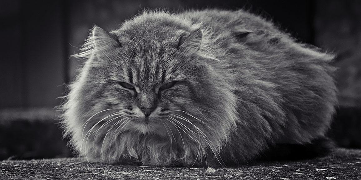 Perché i gatti dormono tanto? E soprattutto… perché dentro le scatole di cartone?